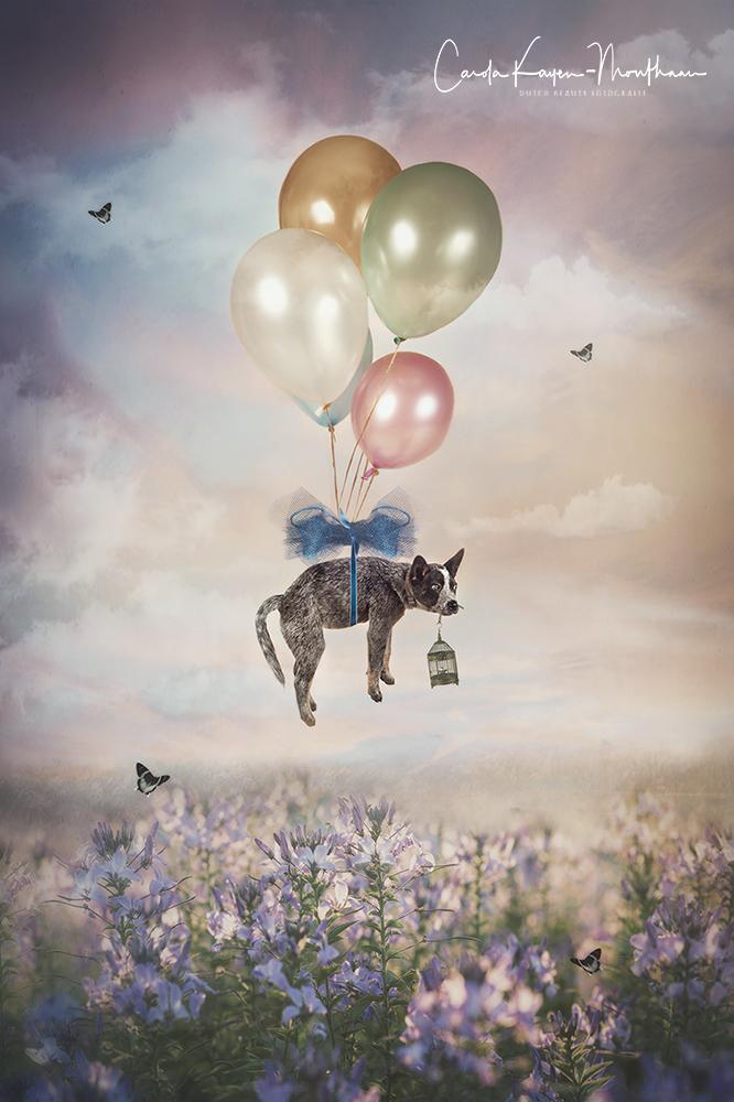 Flying puppy art